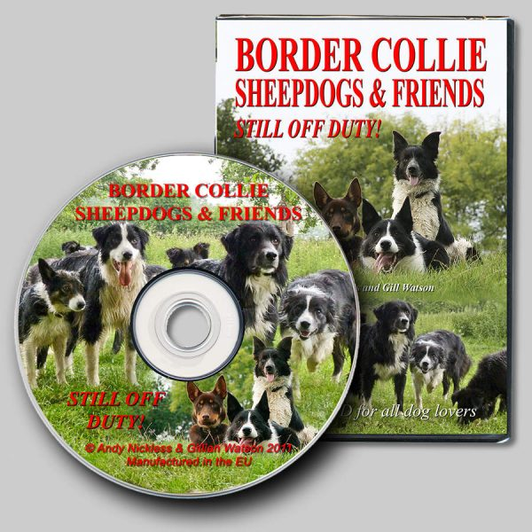 This picture shows the cover and disc of the DVD, and with many of our dogs in a group, looking attentive!