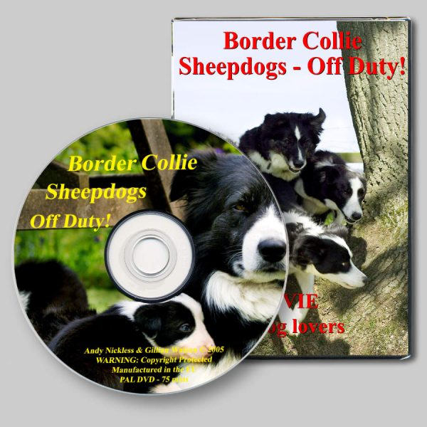 A picture of the Border Collie Sheepdogs Off Duty DVD cover and disc
