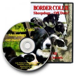 Border Collie Sheepdogs – Off Duty!