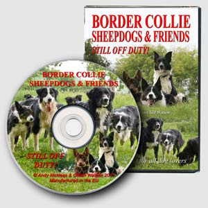 Border Collie Sheepdogs – Still Off Duty!