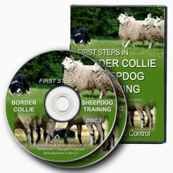 First Steps in Border Collie Sheepdog Training (DVD)
