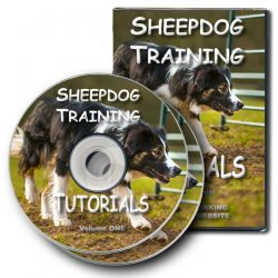The DVD version of our online sheepdog training tutorial videos - volume one