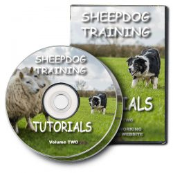 Sheepdog Training Tutorials 2 (DVD)