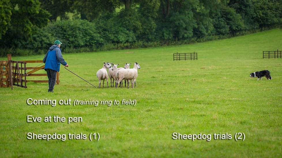 Picture showing the chapters available on volume two of our sheepdog training DVD set