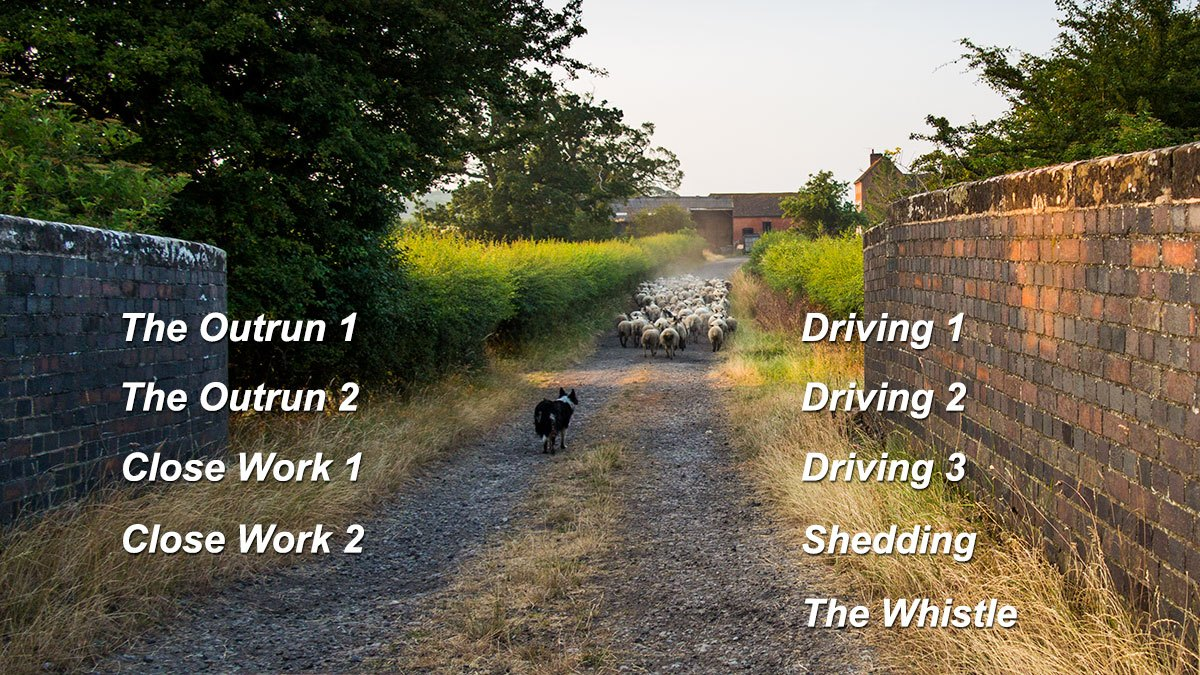 The chapters available on our herding sheepdog training tutorials DVD