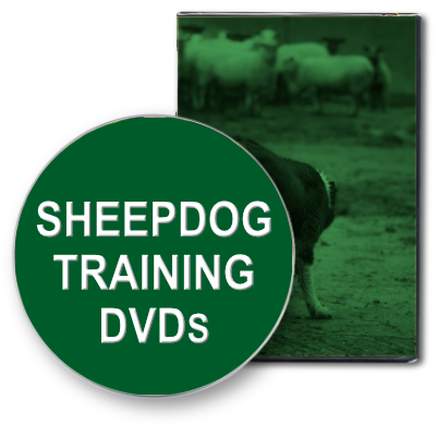 Picture to illustrate the category: Sheepdog Training DVDs